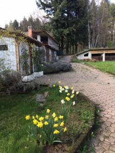 Garden and upper houses