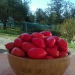 Tomater i bolle