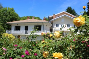 Houses and roses